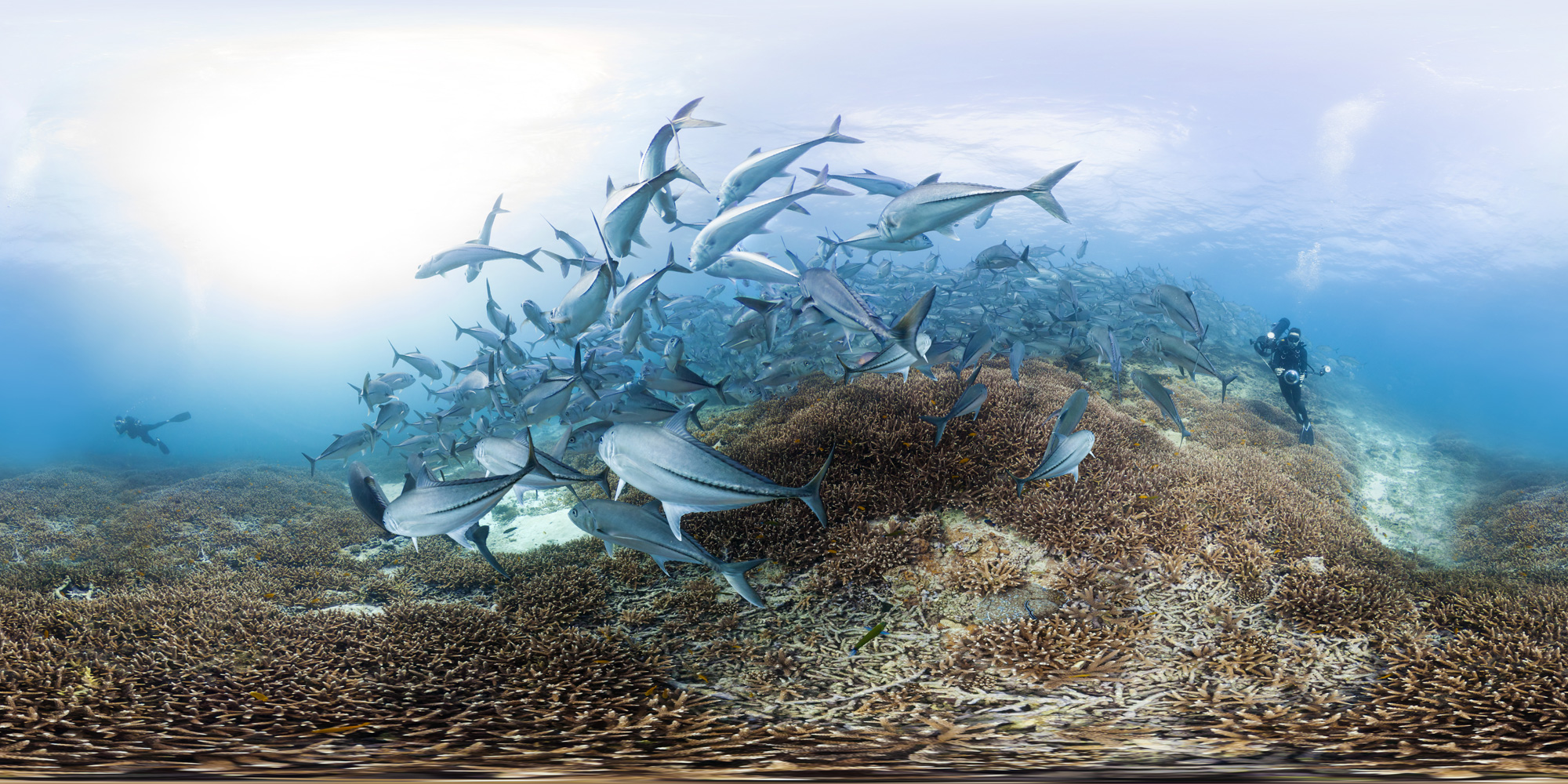 Trevally at Lady Elliot Island   Photo By The Ocean Agency XL Catlin Seaview Survey - Christophe Bailhache